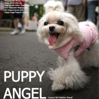 Puppy Angel